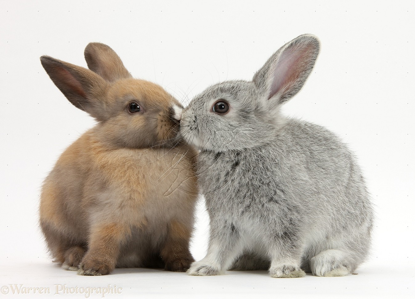 Dating rabbits